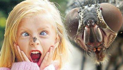 Аллергия на укусы насекомых у ребенка